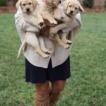 Puppies!! + Lilly Sale Details + Life Lately + NYE Looks